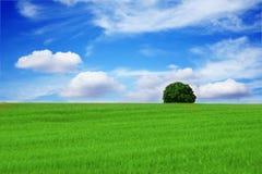Schöne Landschaft des einsamen Baums Stockfotografie