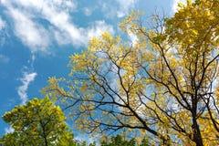 Schöne Landschaft des Herbstes mit gelben Bäumen auf blauer Himmel backgro Lizenzfreies Stockbild