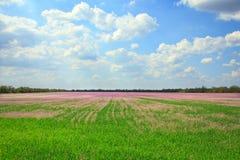 Schöne Landschaft des Lavendelfeldes Lizenzfreie Stockfotografie