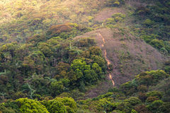 Schöne Landschaft des Regenwaldes mit warmem Licht stockbild