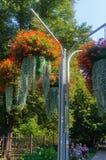 Schöne Landschaft des Sommer-Gartens Dekorative Zusammensetzung von bunten Blumen in Riga lettland stockfotografie