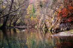 Schöne Landschaft des Waldes reflektiert im Fluss Lizenzfreie Stockfotografie