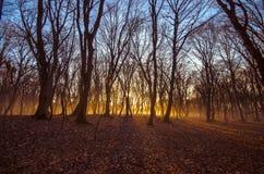 Schöne Landschaft des Winterwaldes zur Sonnenuntergangzeit Sun-Licht im nebelhaften toten Herbstwald Aserbaidschan Gabala Ismaill Stockfoto