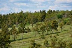 Schöne Landschaft, ein Hügel mit Kiefern und ein blauer Himmel mit Wolken stockfoto
