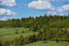 Schöne Landschaft, ein Hügel mit Kiefern und ein blauer Himmel mit Wolken lizenzfreie stockfotografie