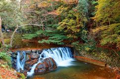 Schöne Landschaft eines reizenden Wasserfalls, der hinunter einen felsigen Strom mit buntem Herbstlaub stolpert lizenzfreies stockfoto