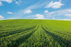 Schöne Landschaft Hellgrünes Feld unter Himmel mit Wolken Lizenzfreies Stockfoto