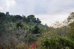 Schöne Landschaft im Libanon 2019 lizenzfreie stockbilder