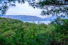 Schöne Landschaft im Wald Stockfotografie