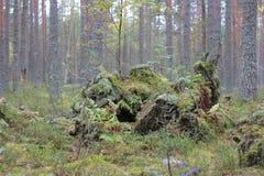 Schöne Landschaft im Wald lizenzfreies stockbild