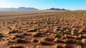 Schöne Landschaft in Kalahari mit großer roter Düne und hellen Farben stockbild
