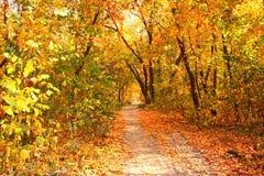 Schöne Landschaft mit Bäumen und Straße im Herbstwald Lizenzfreies Stockfoto