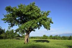 Schöne Landschaft mit Baum lizenzfreie stockbilder
