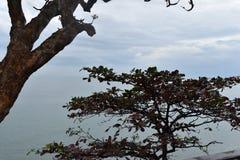 Schöne Landschaft mit einem großen Baum am Affeberg Khao Takiab in Hua Hin, Thailand, Asien Stockbild