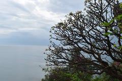 Schöne Landschaft mit einem großen Baum am Affeberg Khao Takiab in Hua Hin, Thailand, Asien Lizenzfreies Stockfoto