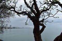 Schöne Landschaft mit einem reizenden großen Baum am Affeberg Khao Takiab in Hua Hin, Thailand, Asien Lizenzfreie Stockfotos