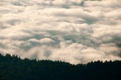 Schöne Landschaft mit einem Wolkenmeer und dem Wald Stockbild