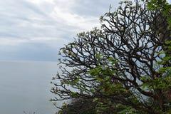 Schöne Landschaft mit einem wunderbaren großen Baum am Affeberg Khao Takiab in Hua Hin, Thailand, Asien Lizenzfreies Stockbild