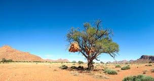 Schöne Landschaft mit großem Baum und Vögel nisten in der Wüste Stockfoto