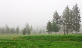 Schöne Landschaft mit Kiefern und Nebel Stockbilder