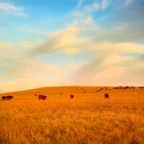 Schöne Landschaft mit Sonnenblumefeld stockfotografie