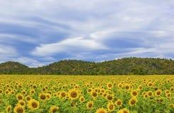 Schöne Landschaft mit Sonnenblumefeld Stockfotos