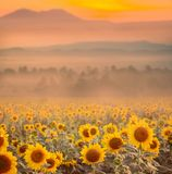 Schöne Landschaft mit Sonnenuntergang- und Blumenfeld lizenzfreie stockfotografie
