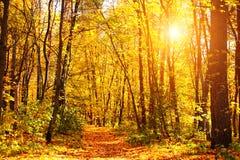 Schöne Landschaft mit Straße im Herbstwald stockfotos