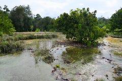 Schöne Landschaft mit Wasser nahe dem Wald stockfoto