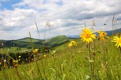 Schöne Landschaft mit Wiese von Wildflowers auf einem Hintergrund O lizenzfreie stockfotografie