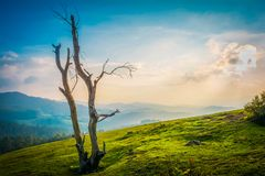 Schöne Landschaft - ooty, Indien Lizenzfreie Stockfotos