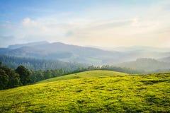 Schöne Landschaft - ooty, Indien lizenzfreie stockbilder