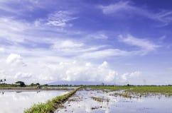 Schöne Landschaft am Reisfeld an der neuen Jahreszeit mit blauem Himmel und weißen Wolken umfasste den Gebirgshintergrund Stockfotos
