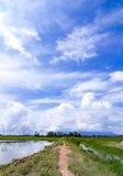 Schöne Landschaft am Reisfeld an der neuen Jahreszeit mit Hintergrund des blauen Himmels Lizenzfreies Stockfoto