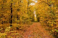 Schöne Landschaft - Straße im Herbstwald stockfotografie