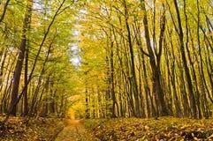 Schöne Landschaft - Straße im Herbstwald lizenzfreie stockfotografie