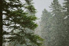 Schöne Landschaften des Winterwaldes lizenzfreies stockbild