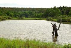 Schöne Landschaftsansicht der Bäume und des Sees mit blauem Himmel stockbilder