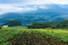 Schöne Landschaftslandschaft des Erntefeldes Lizenzfreie Stockfotografie