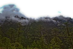 Schöne Landschaftsstoff-Grün-Bäume und Berge bedeckten mit Schnee auf dem Weg zu Yumthang-Tal, Sikkim, Indien mit einer Kappe stockfotografie