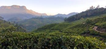Schöne Landschaftswiesenlandschaften und -hintergründe stockfotos