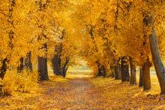 Schöne Landstraße an einem sonnigen Herbsttag stockbilder