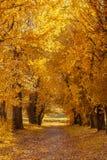 Schöne Landstraße an einem sonnigen Herbsttag stockfoto