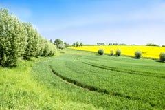 Schöne landwirtschaftliche Felder im Frühjahr Stockbild