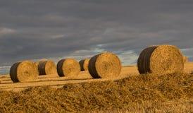 Schöne landwirtschaftliche Landschaft Stockbild