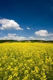 Schöne landwirtschaftliche Landschaft Lizenzfreie Stockfotos
