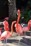 Schöne langhalsige Flamingos Stockfoto
