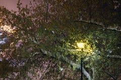 Schöne Laterne unter grünem Baum mit weißem Schnee Stockfoto