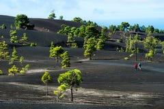 Schöne Lavalandschaft im La Palma stockfotos