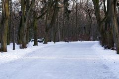 Schöne leere Gasse im eisigen Park des Winters umgeben mit Bäumen Konzept von walkink, gesunder Lebensstil, Freizeit, entspannen  stockfotografie